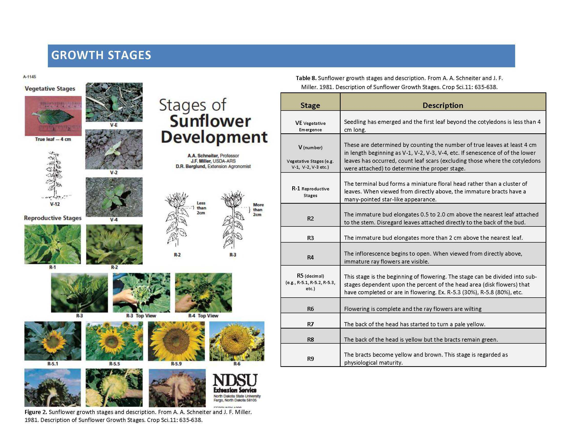 Growth Stages NSAC Page 1